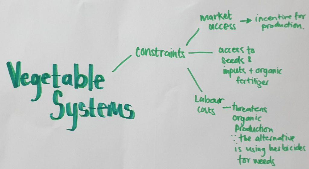 Case study Benin Vegetable systems
